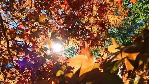 初秋福壽山楓紅 攝影達人分享如何拍