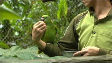 鸚鵡排擠同類怎麼辦?保育員祭孫子兵法管教