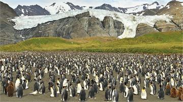 超罕見穿上「黃金戰衣」的企鵝!攝影師幸運捕捉珍貴畫面