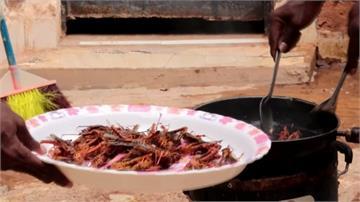 蝗蟲入侵肆虐 索馬利亞「炸蝗蟲配飯」成潮流