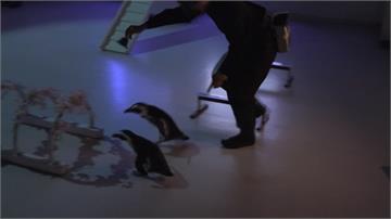 粉嫩櫻花飄進水族館 投影技術打造夢幻氛圍