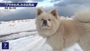 生平故事曾被拍成電影!日本知名狗明星蓬夫13歲高齡過世