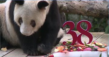 最老圈養貓熊生日 百歲貓瑞吃冰慶生