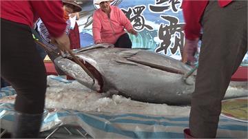 破歷史紀錄!東港第一鮪「每公斤8800元」拍出