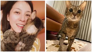 蘇晏霈花20萬治療9歲愛貓 臉書開心報喜