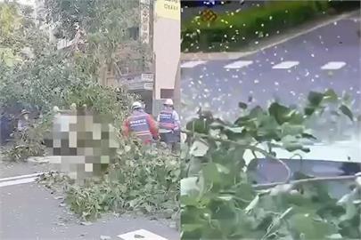 快新聞/嚇壞! 開車停紅燈「路樹突倒塌 」 女駕駛一度受困車內