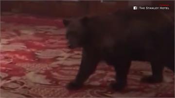 黑熊闖旅館 櫃檯人員拍照PO網吸34萬點閱率