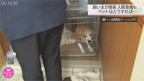 日本確診患者入院治療 寵物誰來照顧怎麼辦?