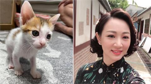 新晉貓奴郁方撿到寶!機率0.003%罕見貓身價高達「2千萬日幣」