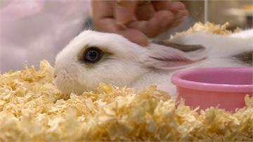 氣!寵物店前棄養兔 婦人行為引發眾怒
