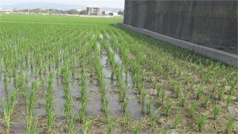 濁水溪逕流減…北彰化農田近4成未插秧 水利署啟用抗旱水井應急