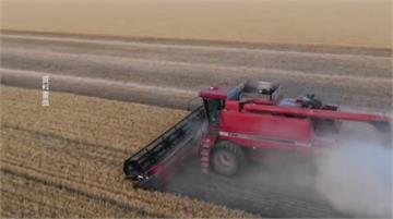 大麥出口被中國課80%反傾銷稅 澳洲正式向WTO申訴