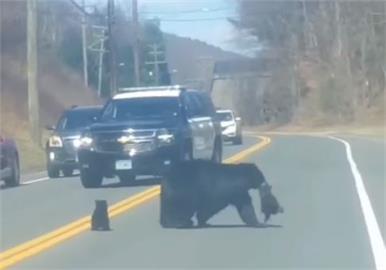 可愛!熊媽媽「1打4」帶寶寶過馬路 雙向車道暫停等候