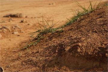土壤學問大 孔隙、酸鹼值影響植物生長
