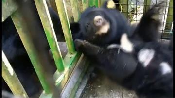 遇見好玩伴!「廣原」、「利稻」小熊相處融洽
