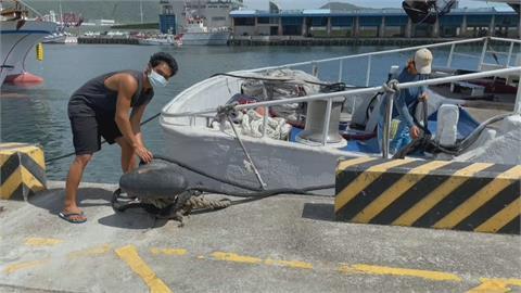 烟花東部外海盤旋 600漁船擠南方澳港區避風