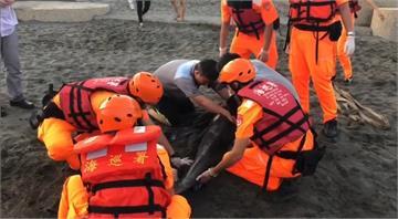 快新聞/西子灣2海豚擱淺 送台南四草鯨豚搶救站治療
