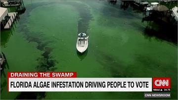 佛羅里達湖泊臭又髒!綠藻危機成選舉議題