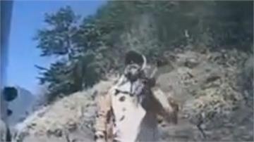 武陵賞櫻爆衝突! 交管員漆彈槍射遊客車窗