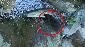 流浪小黑熊健康恢復中!吃飽會爬上樹睡覺