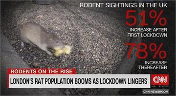 英國倫敦封城 鼠輩猖獗成大問題