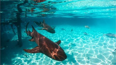 男激怒猛鯊遭「轉身攻擊」!水上摩托車留「恐怖齒印」驚險影片曝光