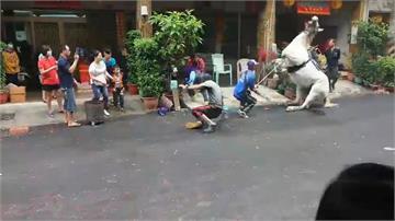 疑遭祭典鞭炮嚇到 白馬後空翻重摔嚇壞民眾