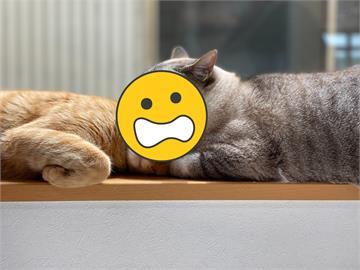 貓咪趁同夥熟睡竟「張嘴咬頭」?網見真相全笑翻:做了好吃的夢吧!