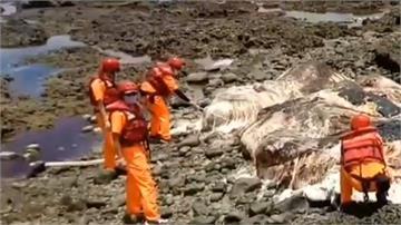 10公尺抹香鯨蘭嶼擱淺死亡 魚體已腐爛