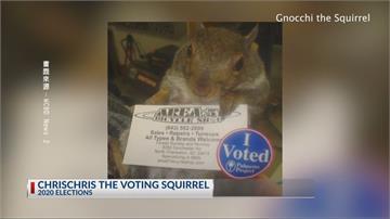 子承父業!南卡羅萊納州松鼠預測美國下一任總統落誰家