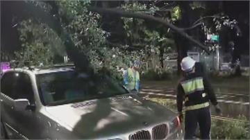 碰!龐然大物從天降! 腐朽路樹斷枝狠砸等紅燈汽車