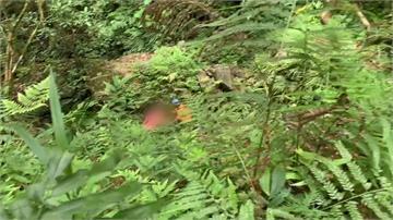 花蓮摔落15公尺深山谷  登山女隊員無法動彈