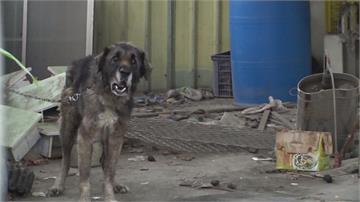 狗沒綁好竄出害酒駕男摔死 飼主判賠441萬