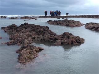快新聞/陳吉仲週一邀環團溝通藻礁議題 「珍愛藻礁」工作小組:不參加