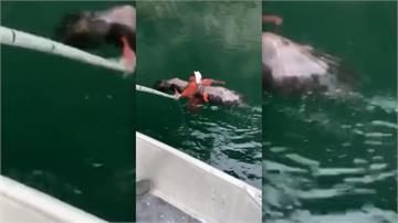 白頭鷹遭章魚纏住險溺斃 養魚場員工出手相救