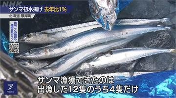 捕光了?北海道開放舷提網捕秋刀魚 首批漁獲量竟然僅去年1%