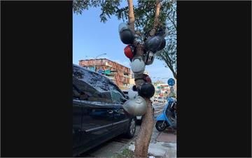 快新聞/新竹超狂「安全帽架」! 15頂直接掛路邊樹上 網笑喊:變成葡萄樹