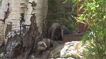 動物園關閉防疫情 意外迎來「嬰兒潮」