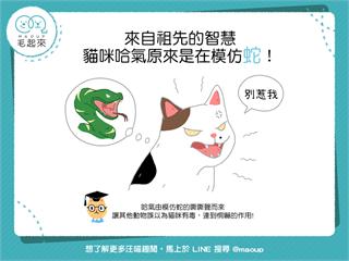 【貓貓小百科】祖先的智慧!貓咪哈氣原來是在模仿蛇!|寵物愛很大