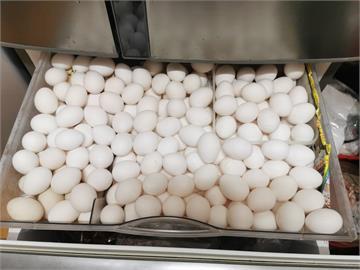 一開冰箱整層全是雞蛋!她曬1家7口10天用蛋量網友狂喊:我也是