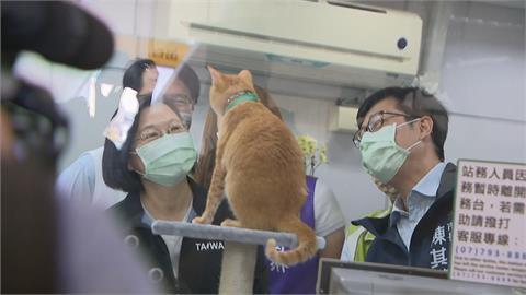 快新聞/高捷貓咪站長「蜜柑」超萌! 「貓奴」蔡英文南下探班