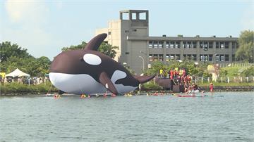 全球最大「Orca亮晶鯨」檢疫出關!百人護送游進安平港
