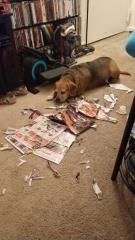 媽媽出門回來後,狗狗超興奮的展示牠的「現代裝飾藝術」成果,媽媽看到要崩潰 寵物愛很大