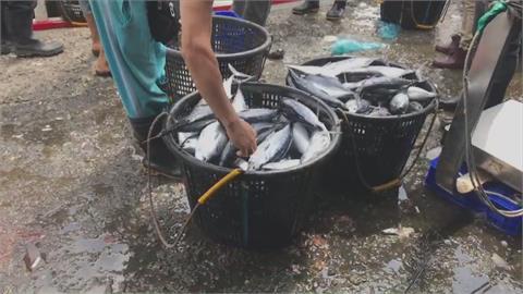 日本決定排核廢水入海 漁民嘆:這樣誰敢買魚?