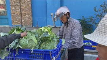 產量多價格暴跌 高麗菜1公斤不到10元農民慘虧