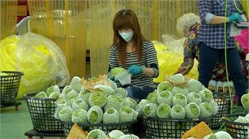 台東鳳梨釋迦轉內銷 價格回升每台斤48元