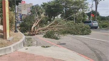 疑似瞬間風勢過大!苗栗頭份路樹倒塌釀五傷