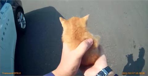 40秒影片竟看46遍!員警解救路中小橘貓 陳其邁、黃偉哲融化:浪費我30分鐘