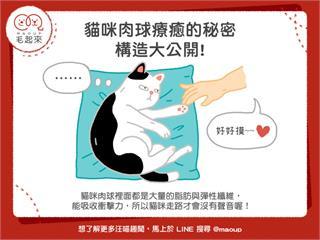 【毛孩知識王】貓咪肉球療癒的秘密~構造大公開!|寵物愛很大