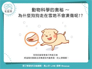 【狗狗冷知識】特異功能?!為什麼狗狗走在雪地不會凍傷呢? 寵物愛很大